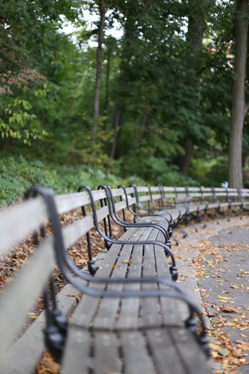 Park Bench Forest Park, Queens, NYC Autumn Beauty In Nature Close-up Day Forest Leaves Lonely Nature Nature No People NYC Nyc Park NYC Street Outdoors Park Park Bench The Way Forward Tree