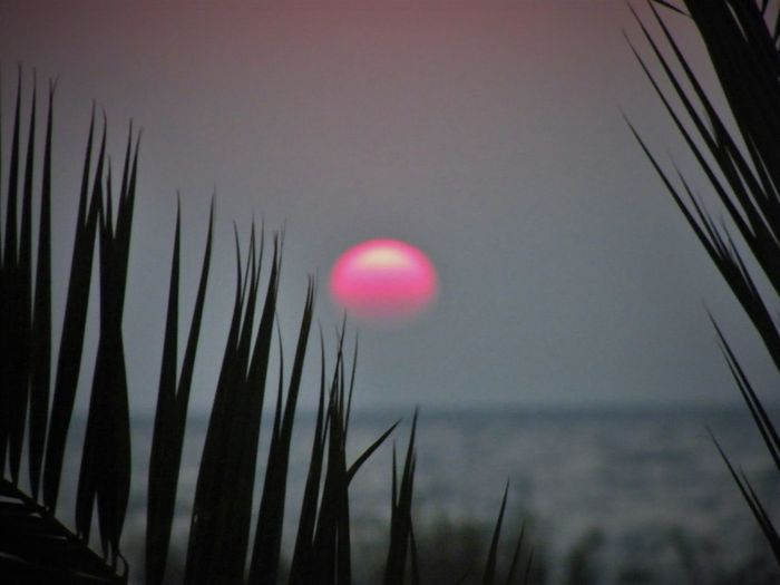 Beauty In Nature Close-up Day Grass Growth MalawiSunset Nature No People Outdoors Scenics Sky