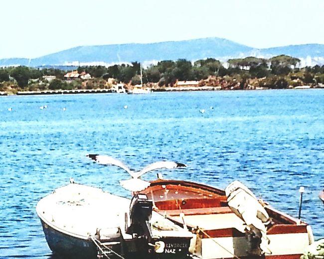 Water Reflections Great Views Photography EyeEm Nature Lover Natural Beauty Sea And Sky Turkey Burgazada Birds Of EyeEm