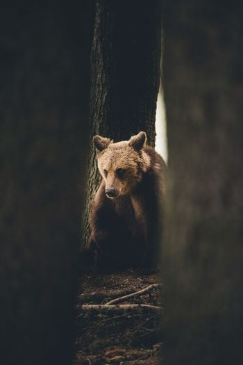 Bear sitting amidst trees in forest