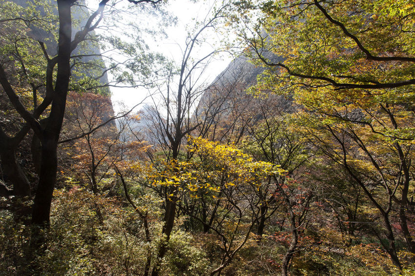 autumn in Maisan Mountain, Jeonbuk, South Korea Architecture Autumn Autumn Autumn Colors Beauty In Nature Branch Change Day Fashion Freshness Growth Leaf Maisan Nature No People Outdoors Tree