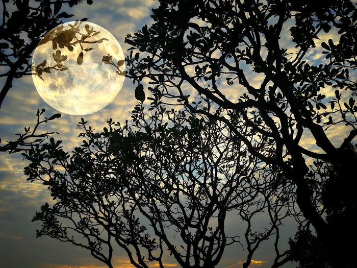 Shadow on tree with moon light Tree Moon No People Low Angle View Nature Close-up Silhouette Backgrounds Sky Outdoors Night Beauty In Nature Pattern Leaf Growth Black Background Light Landscape Shadow Sunset Shadow Garden Nature Green
