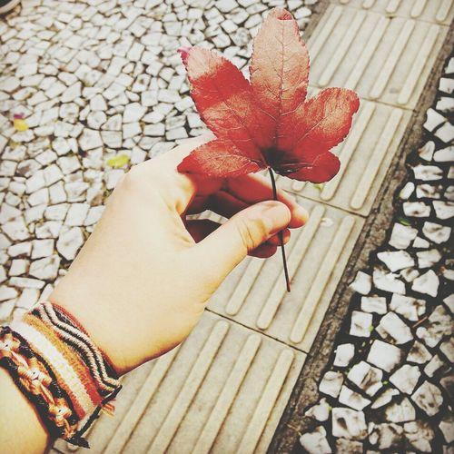 Outono Leaft Autumn
