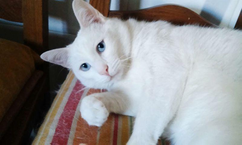Gatinho Cat Lovers Eyemcat Cat♡ Cats Of EyeEm