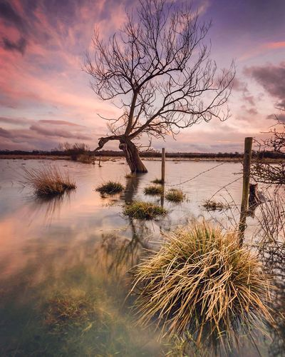 Dusk Wading Showcase: February Reflection Lonely Tree Solitary Tree Tree Flood Floodplain Sunset Dusk Colours Dusk Warm Colours Pink EyeEm Masterclass Nature Photography Landscape Northamptonshire Reflection Perfection  Flooded Tree In Flood Landscapes Water Reflections Water Landscape Water And Sky Sunset And Clouds  The Great Outdoors With Adobe
