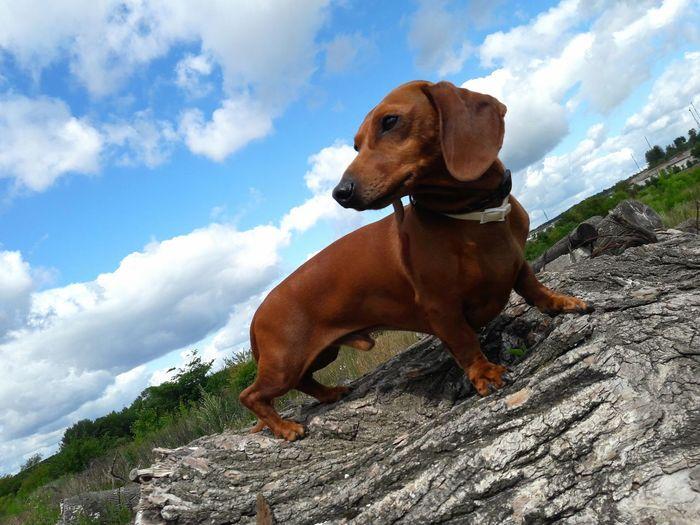 Hello World Samsung J7 Photography Samsung J7 One Animal Helo World Hi! Smartphone Dog
