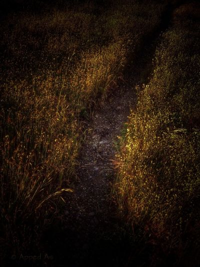 Wild Grass Track NEM Submissions WeAreJuxt.com New Zealand NEM Landscapes