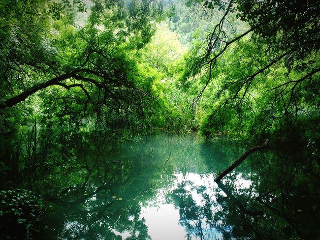 Krka NP, Croatia Nature Photography Green Green Green!  Verdequetequieroverde