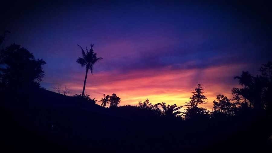 Sunset Palm Tree Tree Nature Beauty In Nature Sky No People Tropical Climate Outdoors Cloud - Sky Low Angle View Twilight Cyclone Amos Scenics After Math Samoa  Paradise The Islands Polynesia South Pacific Tb First Eyeem Photo