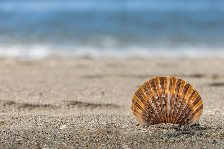 Shell Beach Animal Shell Land Sand Seashell Water Animal Wildlife Sea Animal Nature Close-up Day No People Beauty In Nature Single Object Natural Pattern Pattern Focus On Foreground Outdoors