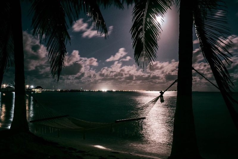 Silhouette palm trees by sea against sky at night