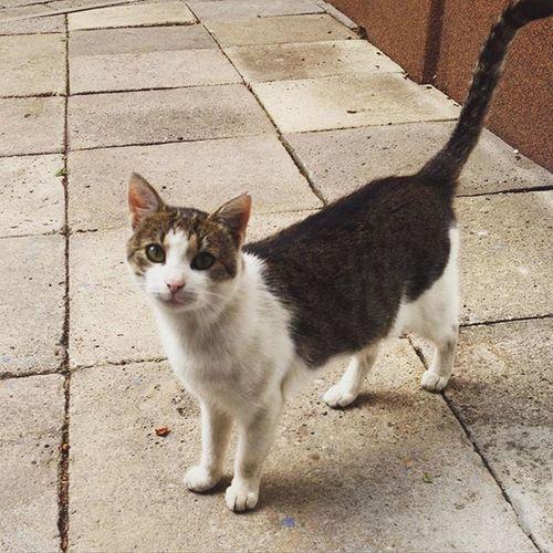 Work Pet Cat Love Shop Customer  Lovley  Cute Guest Welcome Food Mrau Rawr Bigeyes Beauty Friend Poland 😻🐾