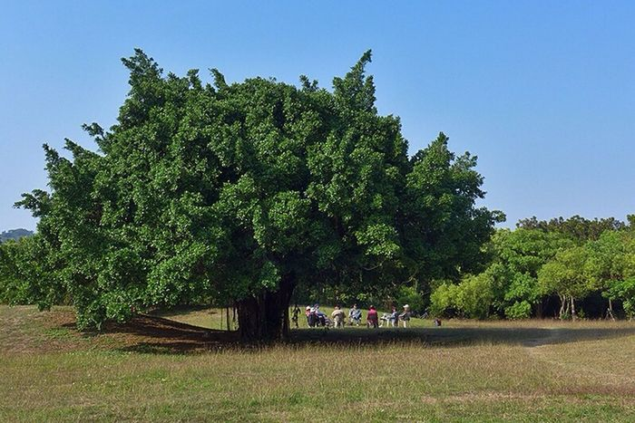 Group Chat under Tree