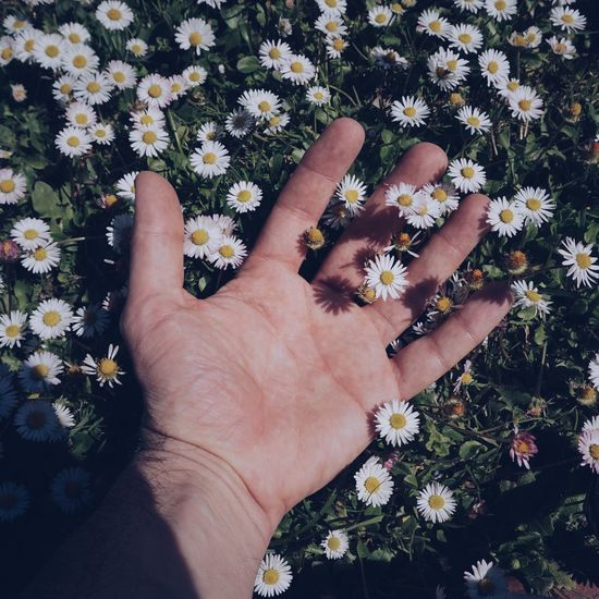 Cropped hand of man amidst flowering plants outdoors
