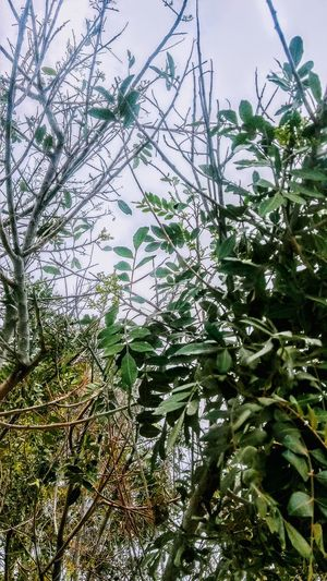 TREES Beauty In Nature Branch Close-up Day Freshness Green Color Growth Leaf Low Angle View Nature No People Outdoors Plant Sky Tree