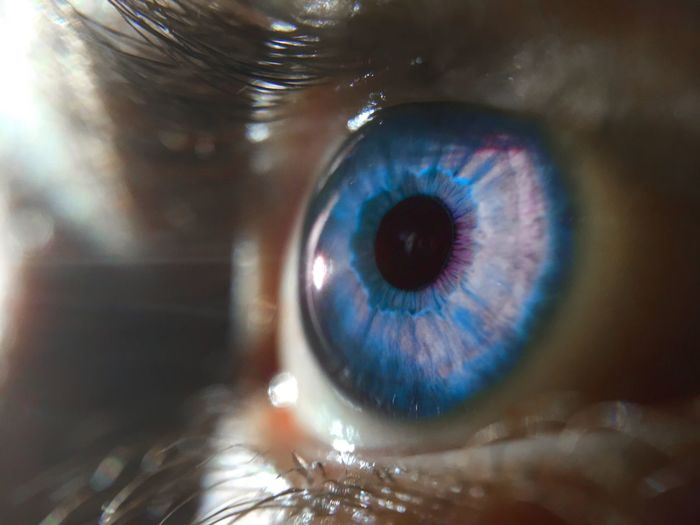 Close-up of blue eye