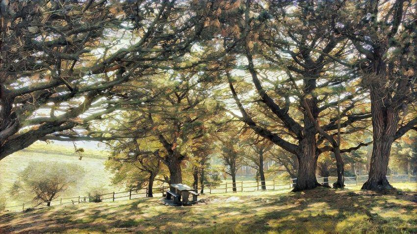 Bizkaia Euskalherria Laarboleda Tree Plant Growth Beauty In Nature Tranquility Tree Trunk Nature A New Beginning