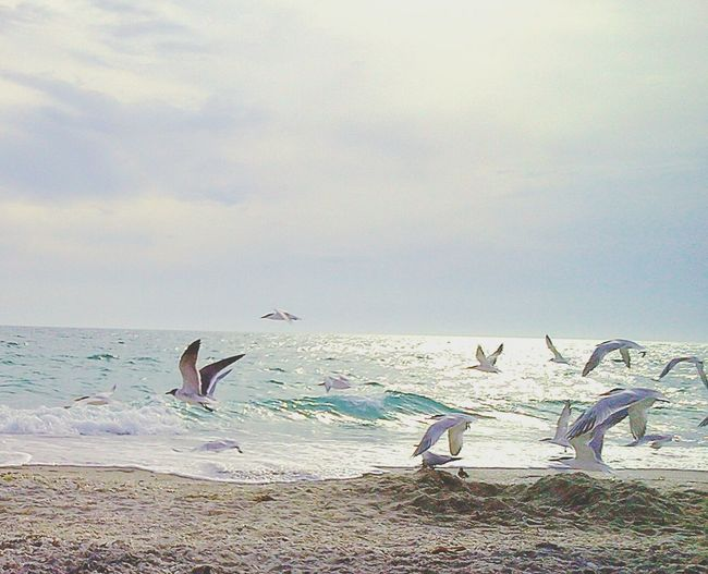 Life Is A Beach Ocean Ocean Life Photography In Motion Beach Oceanside Beach Photography Waves Ocean Bird Seagull Seagulls And Sea Landscapes With WhiteWall Things I Like