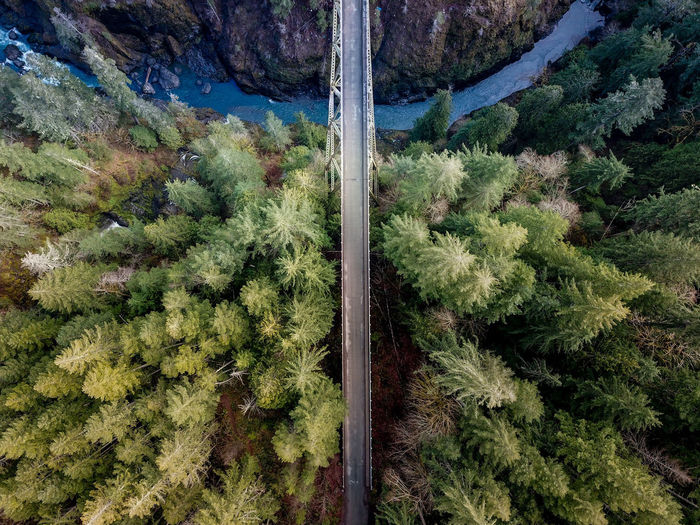 The world is a 't' Tree Mountain Rural Scene Agriculture Forest Aerial View High Angle View Landscape Sky Mountain Road Lush - Description Parallel The Great Outdoors - 2018 EyeEm Awards