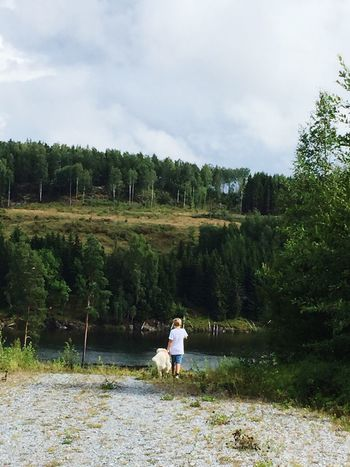 Walking Dog Outdoor River Norway Summer Forest