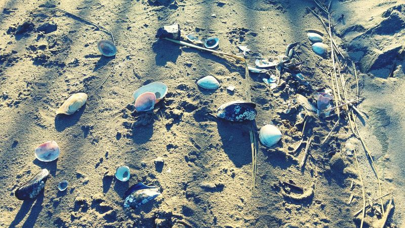 Sand Beach Outdoors Day Close-up Nature Washed Ashore Beachphotography Maritime Sea Meets Land Light And Shadow Seaside Seashell Mussel Findings Findings In Nature Collection Assemblage 3XSPUnity