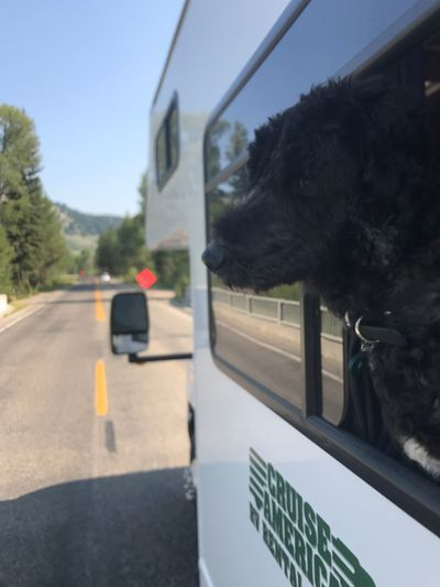 Toby the golden doodle road tripping Transportation Road Mammal Day Sky Mode Of Transportation Land Vehicle Animal Themes Tree Car Nature Motor Vehicle Animal Glass - Material Street City No People Sign Transparent Plant