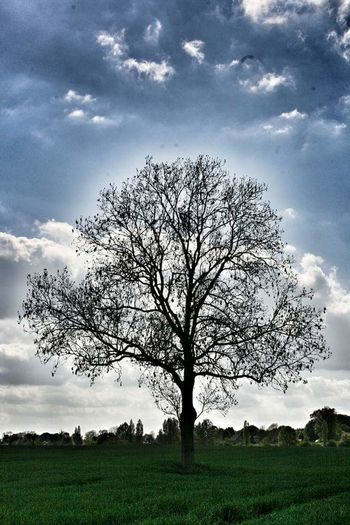 Tree Nature Cloud - Sky Sky No People Tranquility Growth Grass Outdoors Landscape Branch Beauty In Nature Day