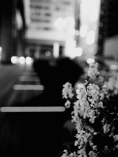 Flower Selective Focus Defocused Plant No People Illuminated City Nature Outdoors Close-up Flower Head Blackandwhite Monochrome World Black And White Collection  Blackandwhitepics Black And White Collection  Cityscape Blackandwhiteonly Blackandwhitephotos Monochrome _ Collection Blackandwhite Photography Blackandwhitephoto Black And White Collection  Night