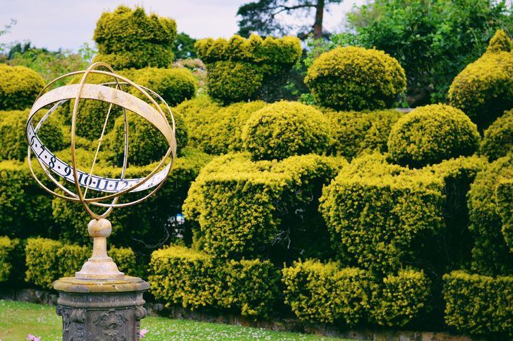 Gardens, Hever Castle Tree Green Color Outdoors Growth Day Plant No People Beauty In Nature Yellow Nature Water Close-up Sky Sundial Chess Horticulture Garden Photography Garden Garden Feature Castle Grounds VSCO Beauty In Nature EyeEm Best Shots
