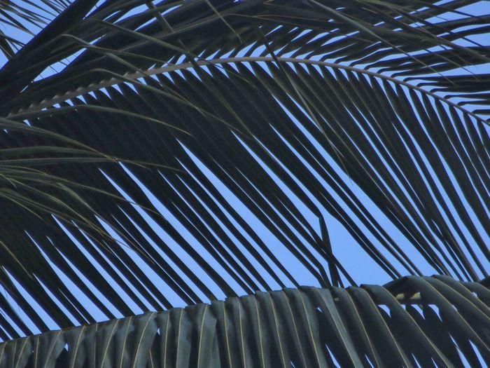 Palm Hiding the