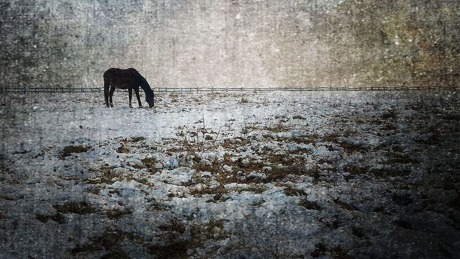 Horse No People Animal Themes Nature Ice Snow Cold Temperature Nature Backgrounds Outdoors Dark Glamour Painting
