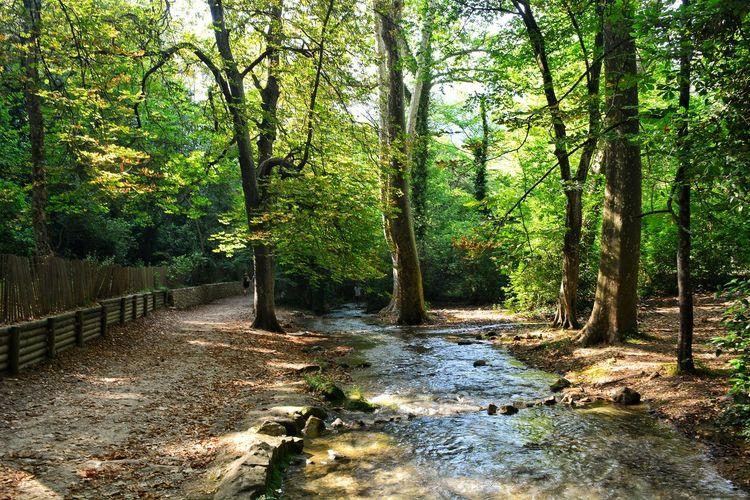 Wild Nature France🇫🇷 Landscape_Collection Landscape Nature Photography Nature_collection Tree Forest