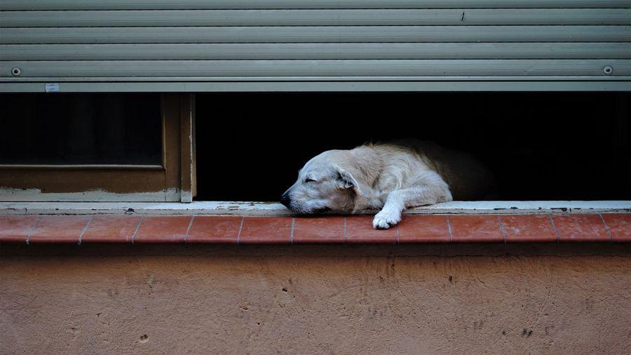 Dog sleeping on window