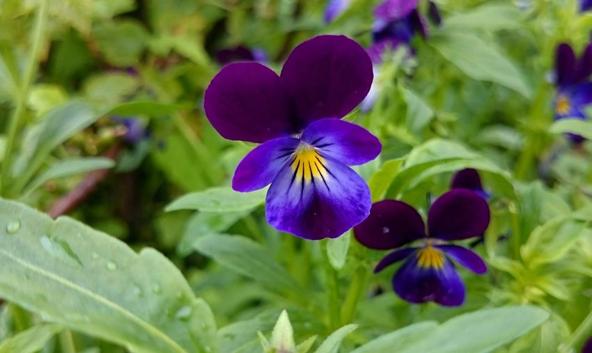 Flower Purple Plant Nature Multi Colored Growth Green Color Day Leaf Beauty In Nature Freshness Petal Close-up Fragility No People Outdoors Flower Head