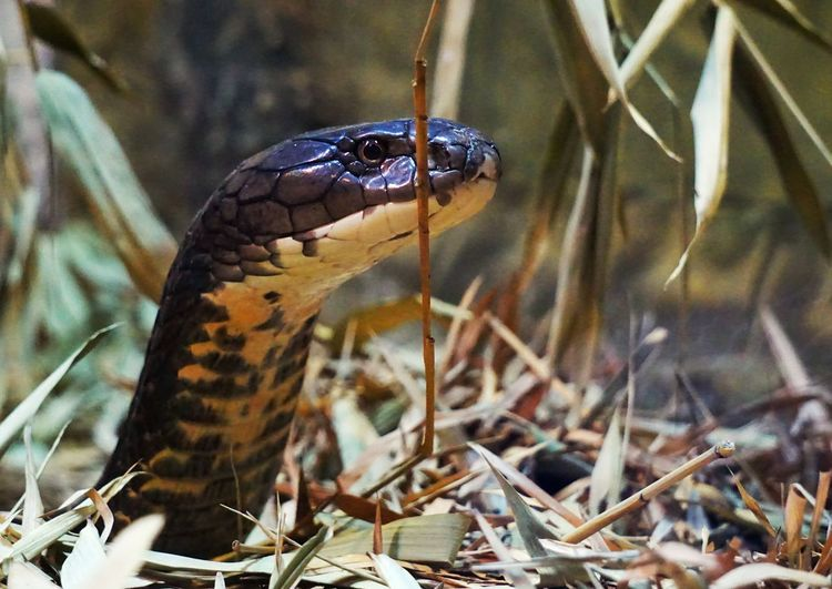 Close-up of a snake against blurred background