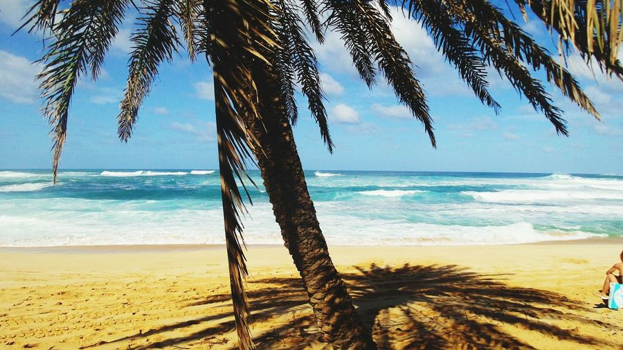 Scenic View Of Beach Under Palmtree Against Sky