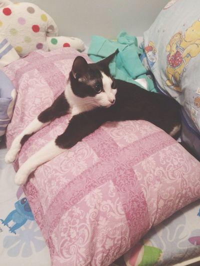 LOL Cat Color Portrait Pets