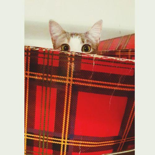 Gatti Domestici Cats Catsagram Cats Of EyeEm Love Micia Orecchie Hiding Buffa Gattina Occhi