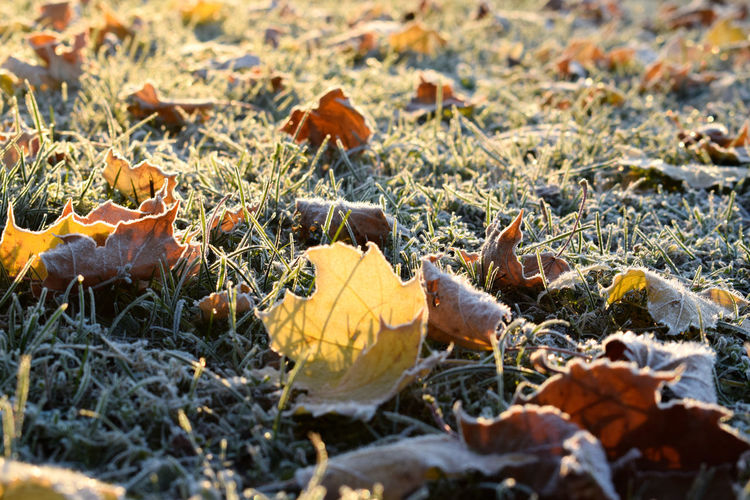 Close-Up Of Fallen Autumn Leaves On Field