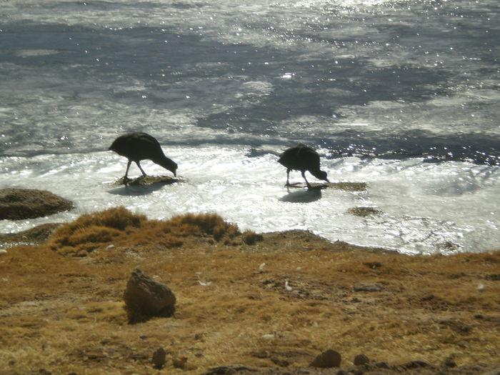 Beach Beak