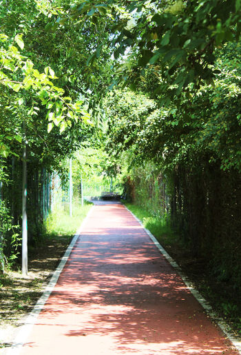 Tree Outdoors Green Color Nature Growth Day Beauty In Nature No People Sky Tunnel The Way Forward Nature Street Redstreet Shadow Walk Magic Red