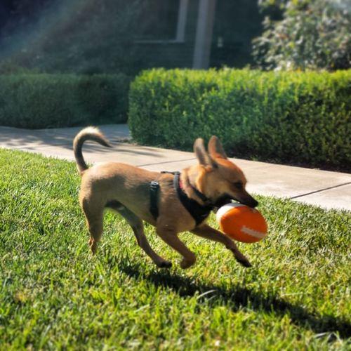 Touchdown!!! Dog Doggy Touchdown Puppyfootball puppy happyrescue rescue happydog Eco @xxabe