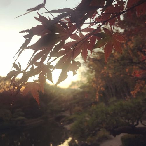 Autumn Park Autumn Plant Tree Growth Nature No People Beauty In Nature Outdoors Leaf Sunset