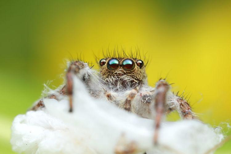Close-up portrait of spider on flower