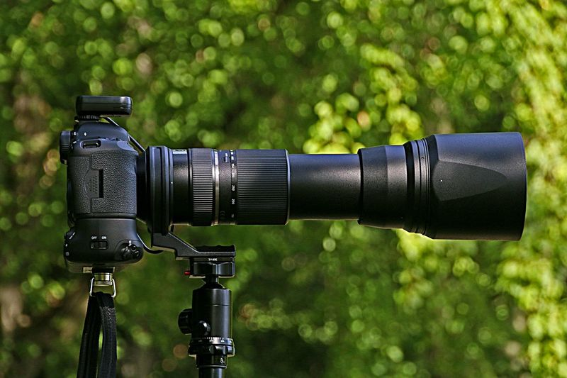 Close-up of camera against trees