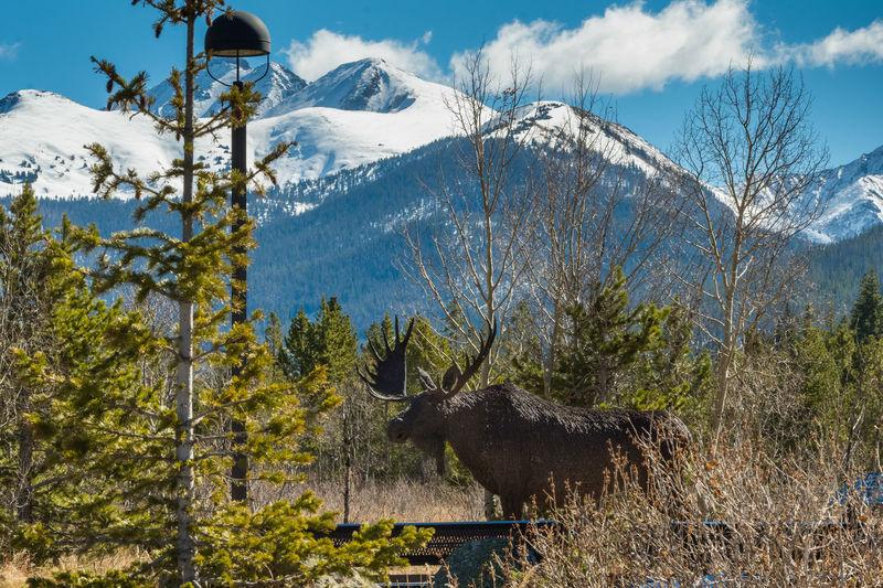 Moose statue at