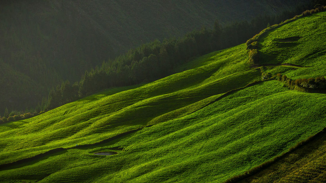 Agriculture Beauty In Nature Cereal Plant Crop  Day Farm Field Green Color Growth Landscape Mountain Nature No People Outdoors Rice - Cereal Plant Rice Paddy Rural Scene Scenics Terraced Field Tranquil Scene Tranquility Tree Wheat