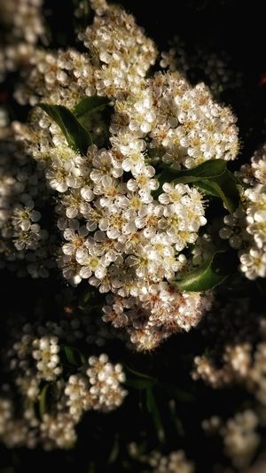 Nature No People Close-up Plant Growth Beauty In Nature Flower Outdoors Day Fragility UnderSea White Color Petal Freshness Flower Head Leaf Tranquility Beauty In Nature Beauty Grass Rural Scene Green Color Growth Plant Nature