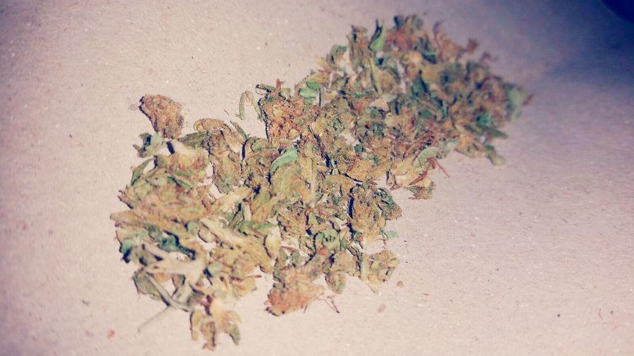Canabisculture Growweedmy Weed Life Marihuana Legal Tree Cogon Grass Urugrow