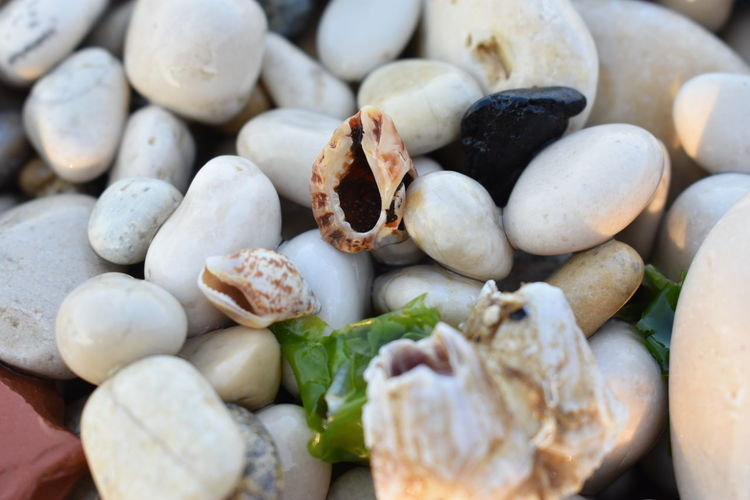 Shells🐚 Abundance Backgrounds Choice Close-up Day Food Food And Drink Freshness Full Frame Healthy Eating High Angle View Large Group Of Objects No People Outdoors Pebble Shells Still Life Stone Stone - Object Variation Wellbeing